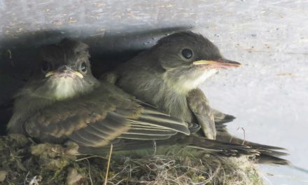The Swallow has found a Nest for Herself – Ps 84:3